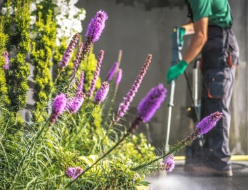 5 Reasons To Hire A Pressure Washing Company to Clean Your Concrete Driveway and Walks